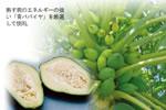 カリカセラピ PS501は、無農薬のカリカパパイアが主原料
